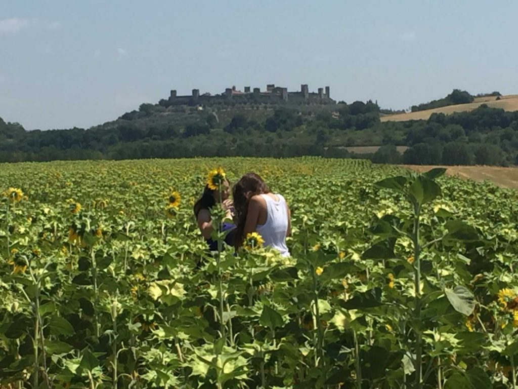 One Day Bike Tour & Sunflowers - Bike Florence&Tuscany