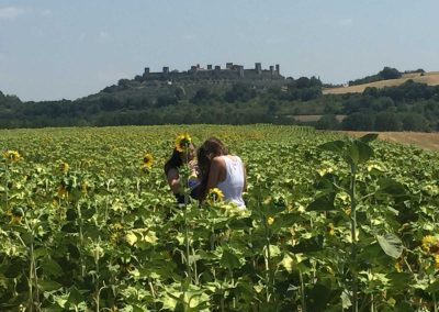 San Gimignano to Siena bike tour - Sunflowers in Tuscany | bikeinflorence.com