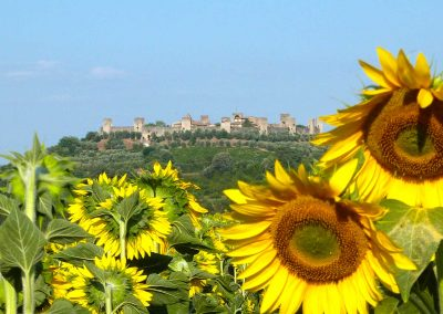 San Gimignano to Siena bike tour
