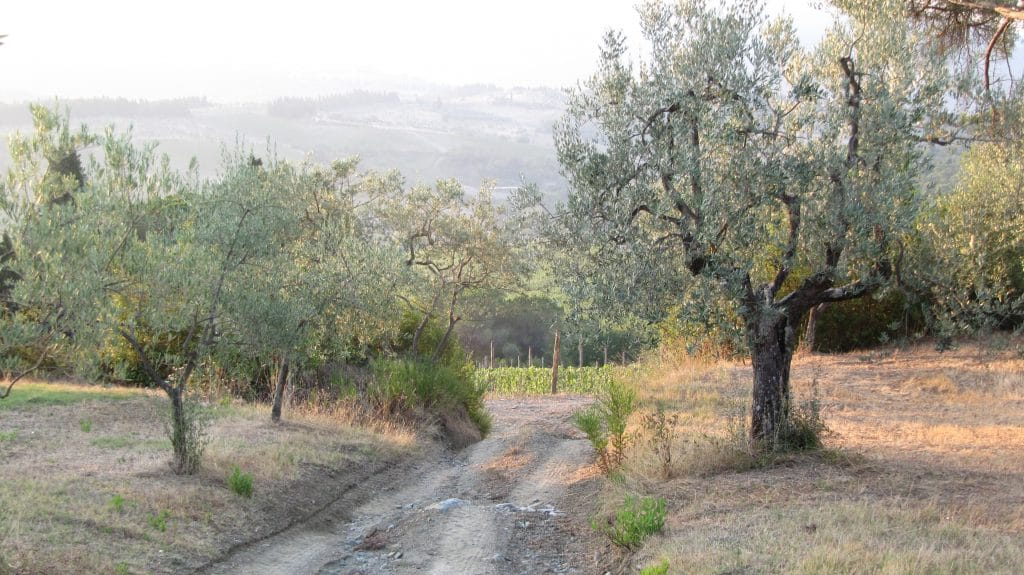 Tuscany in fall for travelers means grape & Olive Oil harvest