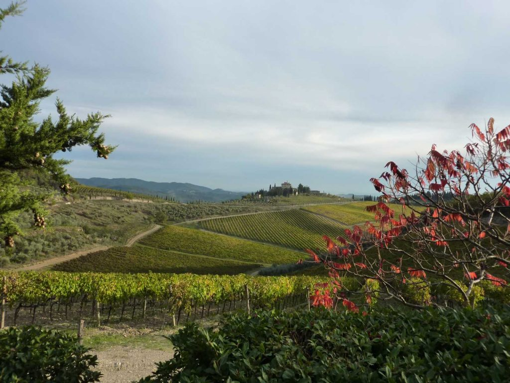 Wine tasting in Chianti with Bike in Florence & Tuscany