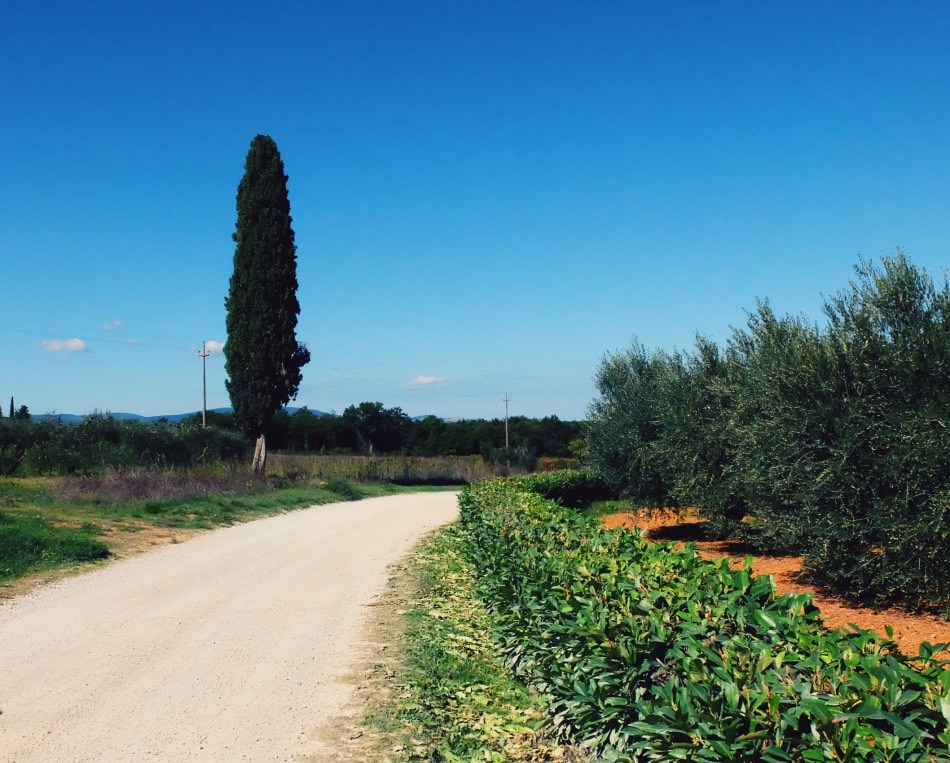 Bike Florence and Tuscany: Biking Tuscany in Fall