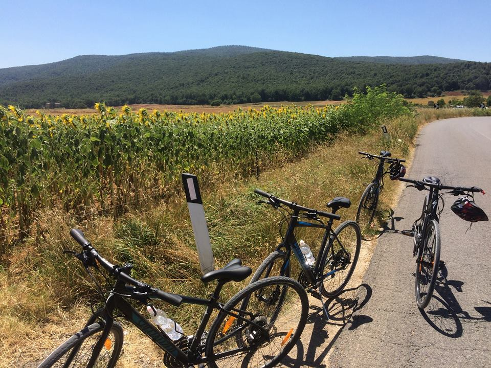 Sunflowers in Tuscany with Bike Florence & Tuscany