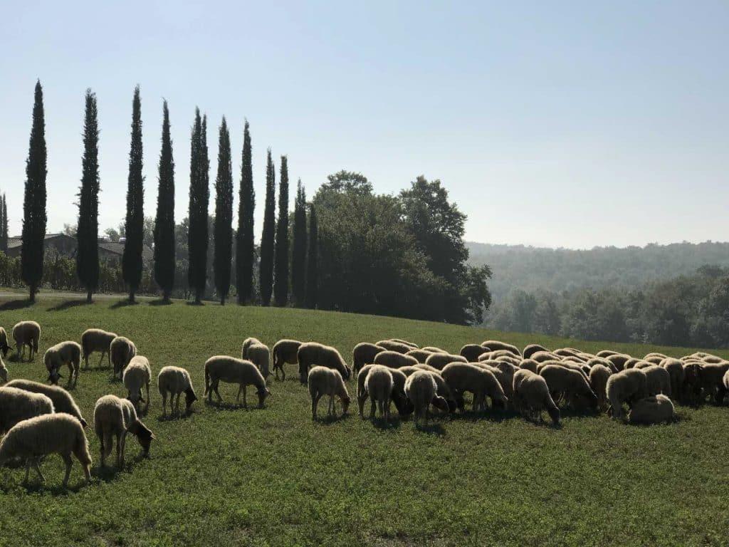 San Gimignano to Siena bike tour | Tuscany countryside | bikeinflorence.com