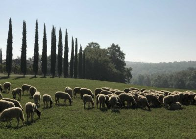 San Gimignano to Siena bike tour - Tuscany countryside | bikeinflorence.com