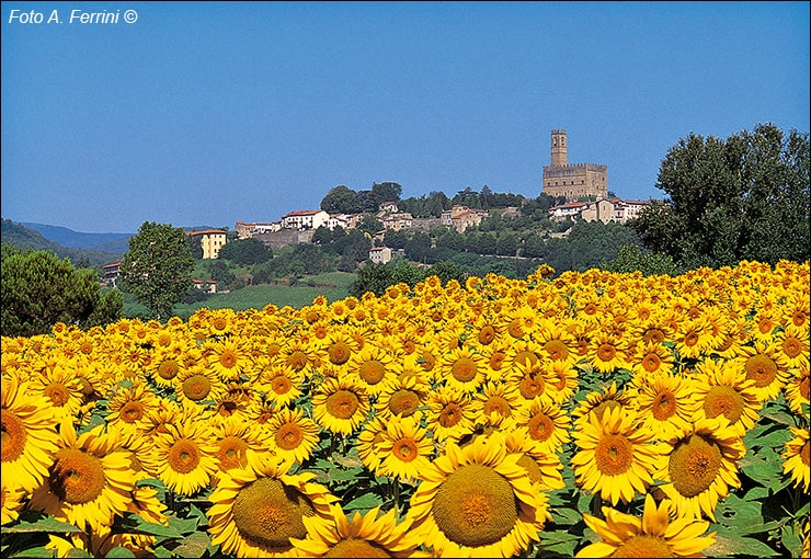 Alessandro Ferrini photographer of Sunflower fields in Casentino :: Bike Florence & Tuscany