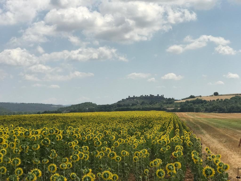 Great Sunflower Tour Ideas in Chianti :: Bike Florence & Tuscany